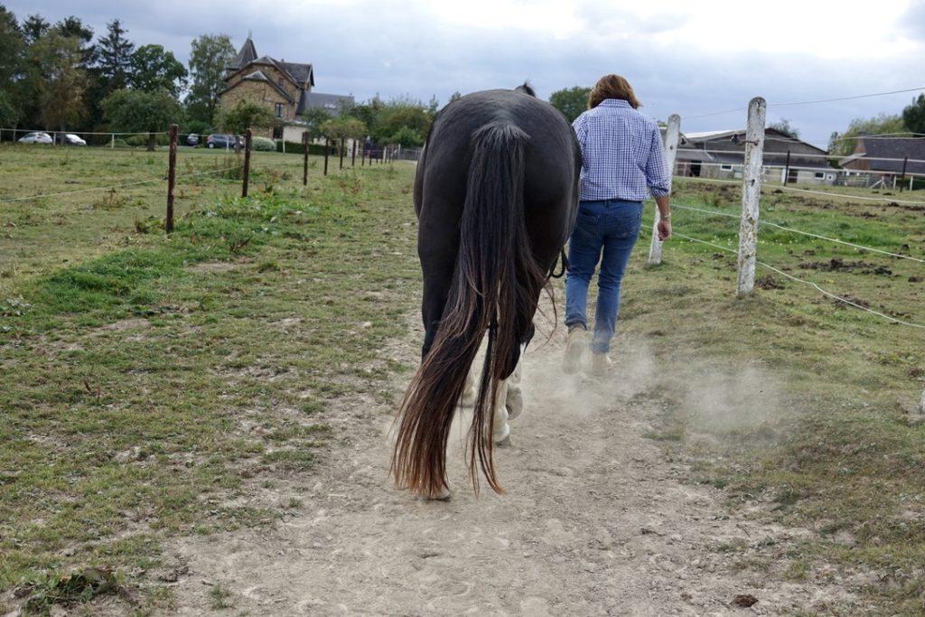 coaching par le cheval, Infrastructures